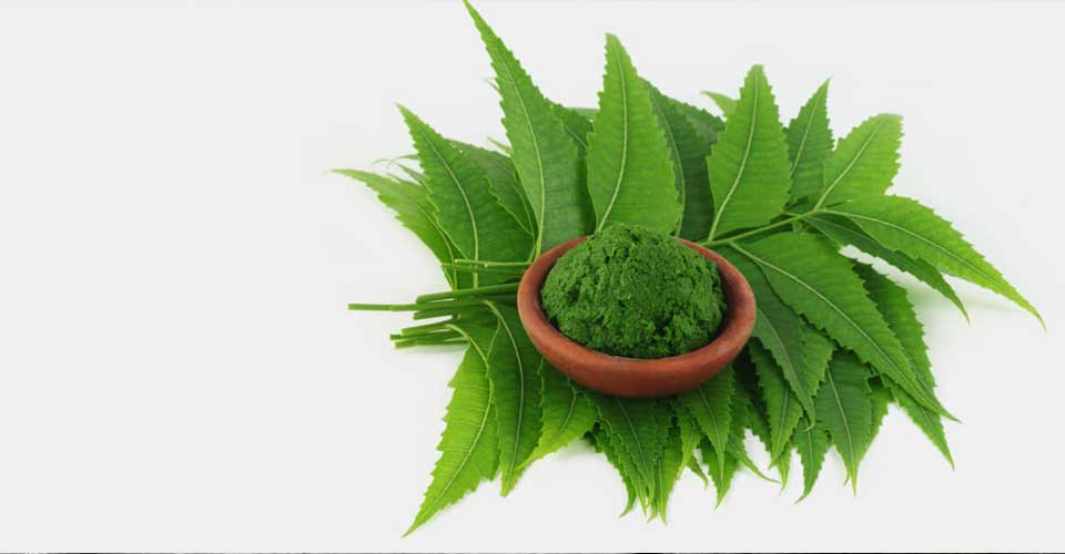 neem for toothache