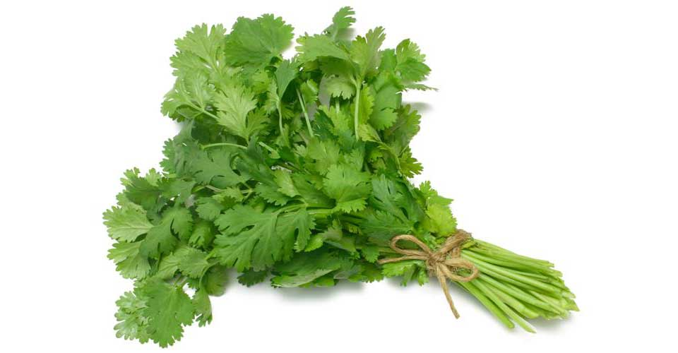 Cilantro for toothache