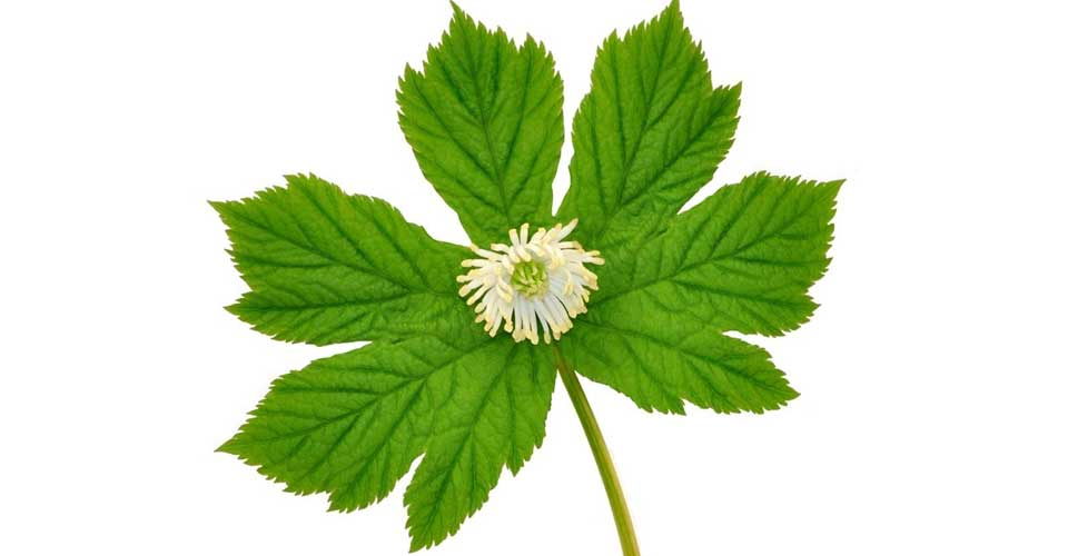 Goldenseal for toothache