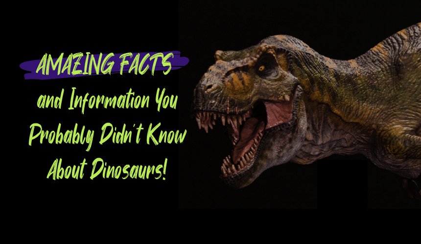 Dinosaur Teeth: Amazing Facts and Information You Probably Didn't Know About Dinosaurs!